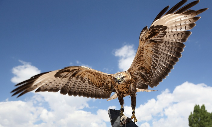 Hawk Manor Falconry - Hawk Manor Falconry: Four-Hour Falconry Hunting Experience for One or Two at Hawk Manor Falconry (50% Off)