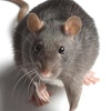 65% Off a Rodent-Trapping Program and Entry-Point Inspection