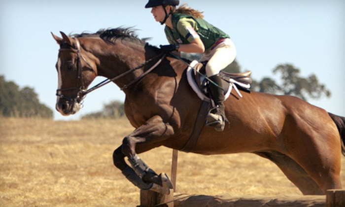 Palermo Show Stable - Bedminster: Two or Four English-Style Horse-Riding Lessons at Palermo Show Stable (Up to 66% Off)