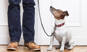 $5 For An Accredited Online Animal-training And Pet-sitting Course From Holly And Hugo ($175 Value)