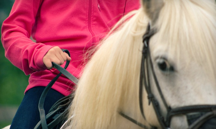 KC Training Center - Deltona: Two 60-Minute Horseback-Riding Lessons for One or Two at KC Training Center in Osteen (Up to 55% Off)
