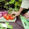 55% Off Organic City-Farming Workshop