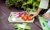Fresh City Farms - Fresh City Greenhouse, Downsview Park: $29 for a 2.5-Hour Organic City-Farming Workshop with Seed Starter Kit from Fresh City ($64.99 Value)