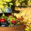 Up to 52% Off Wine Tasting at Johan Vineyards