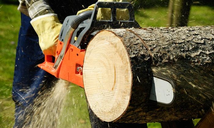 Go 2 Guys Tree Service - Oklahoma City: $124 for $225 Worth of Landscaping — Go 2 Guys Tree Service