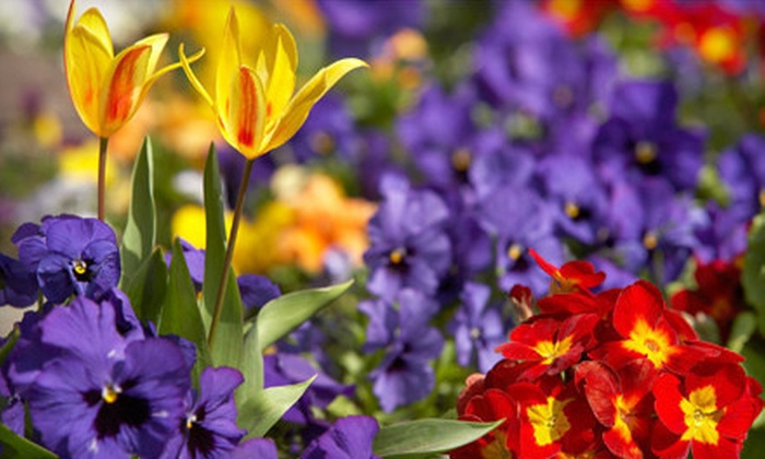 The Plant Stop - Shady Oaks Ranches: $20 for $40 Worth of Plants and Flowers at The Plant Stop