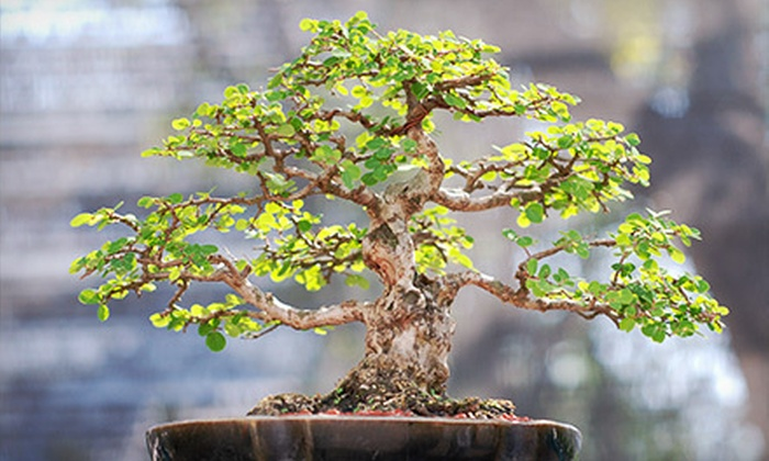17th Annual Garden Festival & Bonsai Show at Flamingo Gardens - Flamingo Groves: $9 for Visit to the 17th Annual Garden Festival & Bonsai Show on February 16–17 at Flamingo Gardens (Up to $18 Value)