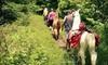 Smoky Mountain Llama Treks: Two- or Five-Hour Llama Trail Trek for Two from Smoky Mountain Llama Treks (Half Off)