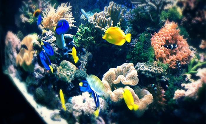 Ocean Explorium - New Bedford: Visit for Four with Optional Habitat Adoption at Ocean Explorium (Up to Half Off)