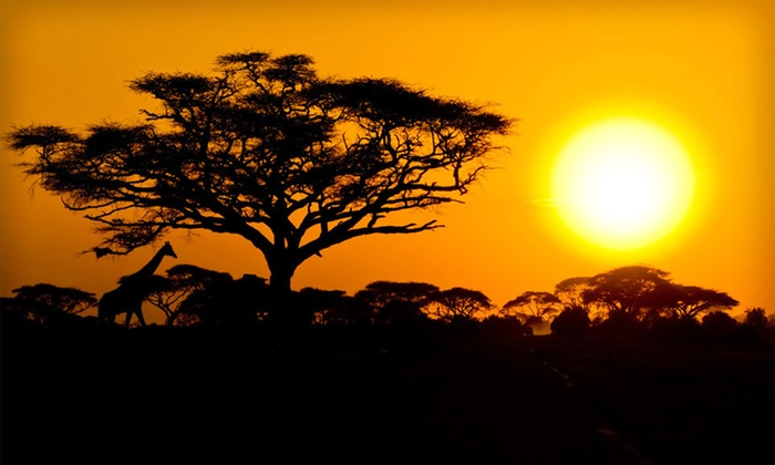 Nine-Day Safari - Tarrytown: Nine-Day Kenyan Safari Honeymoon with Round-Trip Airfare from JFK, Meals, Accommodations and Transportation from Odyssey Safaris