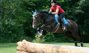 Another Farm: One or Three 60-Minute Horseback-Riding Lessons for Two at Another Farm (Up to 54% Off)