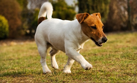 Grooming of a Small Dog Weighing 15 Pounds or Less (a $45 value) - Shampooches Salon & Spaw in Colonial Heights
