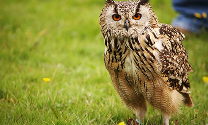 The Coniston Hotel - Non-Accommodation - The Coniston Hotel: Falconry With Lunch For One (£26) or Two (£52) at The Coniston Hotel (63% Off)