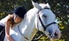 Embracing Horses - Owen Quarter Horses: One or Three Group or Private Kids' Riding Lessons from Embracing Horses (Up to 67% Off)