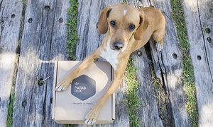 PATASBOX: 1 o 3 meses de suscripción a Patasbox, la caja mensual a domicilio con productos para perros desde 8,99 €
