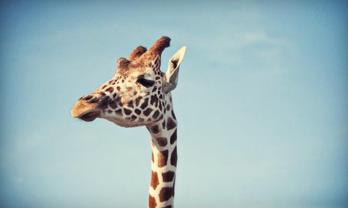 African Safari Wildlife Park - Port Clinton: African Safari Wildlife Park Visit on Weekday or Any Day (Up to 73% Off)