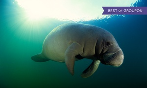 American Pro Diving Center: Guided Manatee Snorkel Tour for One or Two from American Pro Diving Center (Up to 60% Off)