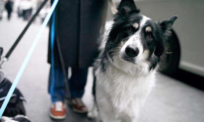 Sammy's Pet Sitting - Ridge: Up to 79% Off Pet Daycare at Sammy's Pet Sitting