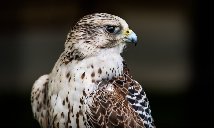 Riverside Falconry - Multiple Locations: One-Hour Private Bird Handling Experience at Riverside Falconry (58% Off)