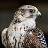 Cape Fear Raptor Center –Up to 50% Off Live Bird Experiences