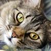 78% Off Pet Wellness Exam or Checkup