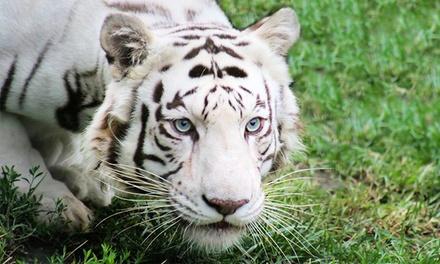 Endangered Animal tour and Play with a Baby Tiger, Baby Bear, Kangaroo, and More at The Garold Wayne Interactive Zoological Park (50% Off)