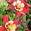 43% Off Trees, Shrubs, and Plants