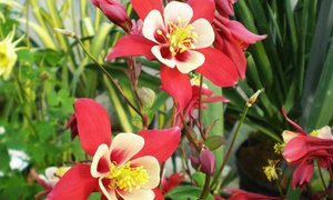 Lincoln Park Nursery: $17 for $30 Worth of Trees, Shrubs, and Plants at Lincoln Park Nursery