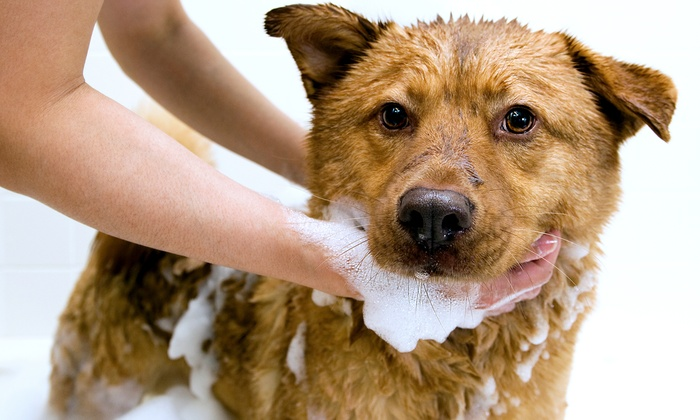 Classy Canines - Bullard: Grooming Package with Bath, Brush, and Nail Trim for a Small, Medium, or Large Dog at Classy Canines (50% Off)