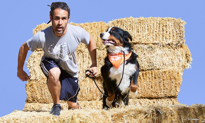 Mutt Mudders: The Fun Mutt SLC Obstacle Race for One or Two People with Dogs from Mutt Mudders on June 6 (Up to 52% Off)