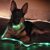 LED Dog Collar with Matching Leash