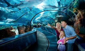 Admission for One to Ripley's Aquarium Plus One Ripley's Ocean Boulevard Attraction (Up to 27% Off)