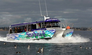 Seahawk Gulf Charters: $80 for a Twilight Fishing Tour Including Rod and Bait for One Person, Westhaven (Up to $120 Value)