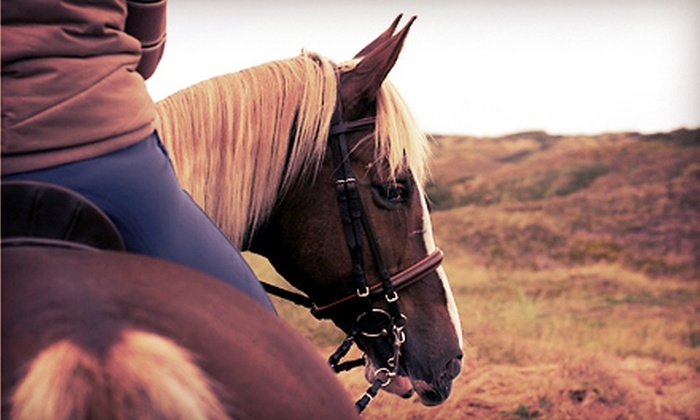 Sapphire Hills Stable - Elgin: One, Three, or Five 30-Minute Private Horseback-Riding Lessons at Sapphire Hills Stable (Up to 65% Off)