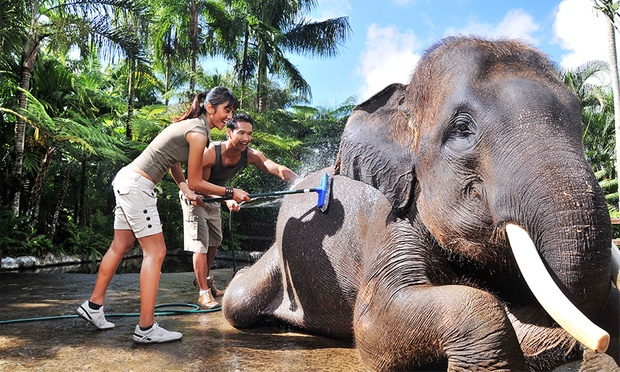 Bali: 5* Lodge + Elephant Safari 6