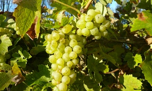 Carr Taylor Vineyard: Carr Taylor Vineyard: Tour Plus Lunch For Two for £29