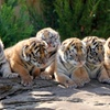 Up to 58% Off at Greater Wynne Wood Exotic Animal Park