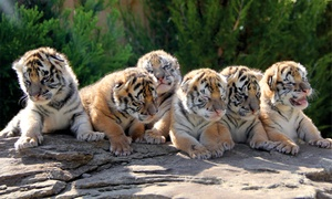 Greater Wynne Wood Exotic Animal Park: General Admission or Endangered Animal Tour at Greater Wynne Wood Exotic Animal Park (Up to 63% Off)