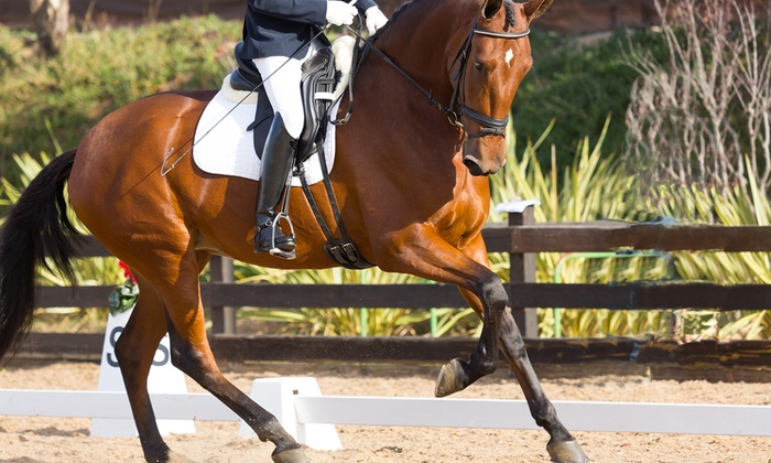 Ahimsa Animal Chiropractic and Laser Therapy - Davis: One or Three Equine Chiropractic Adjustments at Ahimsa Animal Chiropractic and Laser Therapy (Up to 52% Off)