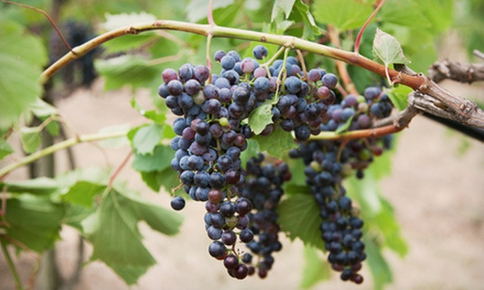 Fox Valley Winery Vineyard - Chicago: $40 for Guided Tour and Tasting for Two Adults from Fox Valley Winery Vineyard (Up to $82.95 Value). Eight Dates Available.