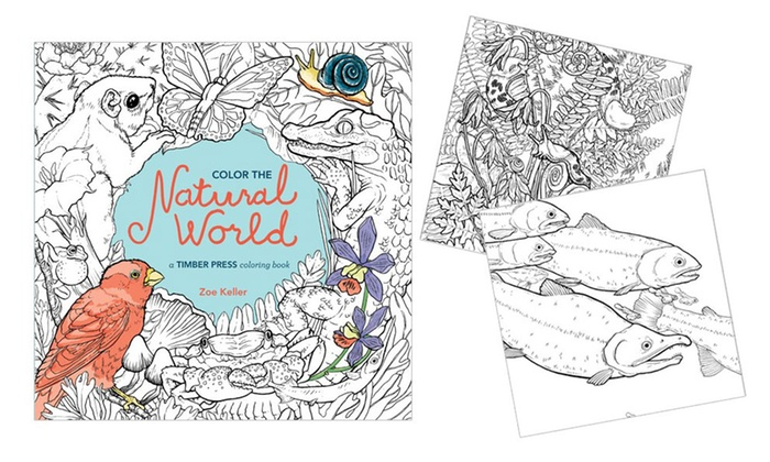 Up To 32 Off On Coloring Books For Adults