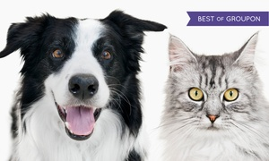 VetweRx: $179 for a Dental-Cleaning Package for a Dog or Cat at VetweRx ($600 Value)