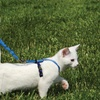 Come With Me Kitty Harness and Bungee Leash