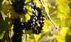 Vivac Winery - Multiple Locations: Wine Tasting for Two or Four with Syrah Wine to Take Home at Vivac Winery (Up to 51% Off)