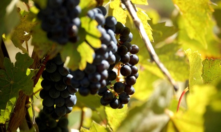 Wine Tasting for Two or Four with Syrah Wine to Take Home at Vivac Winery (Up to 51% Off)