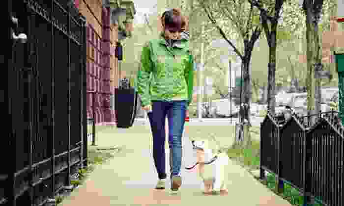 Platinum Pet Services - Ashwood: 5 or 10 Dog-Walking or Pet-Sitting Visits from Platinum Pet Services (Up to 69% Off)