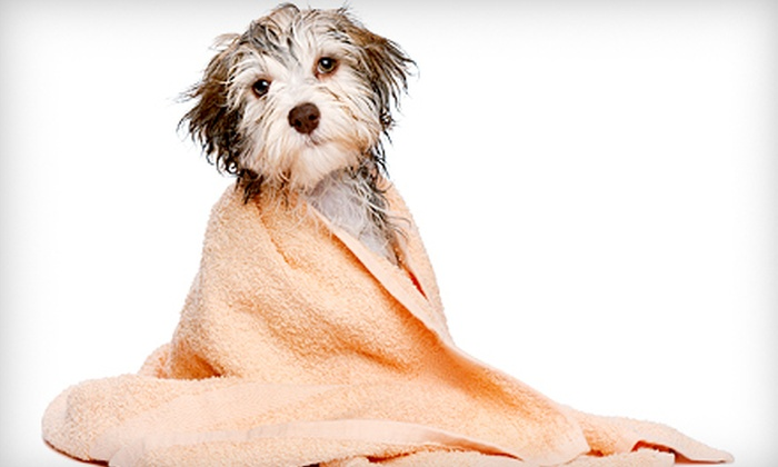 The Pampered Pet Hotel & Spa - Northridge: Grooming for a Dog Weighing Up to 25, 65, or 75 Pounds at The Pampered Pet Hotel & Spa (Up to 51% Off)