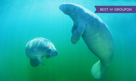 $30 for a Manatee Tour & SnorkelEquipment Rental for One Adult from Manatee Tour and Snorkel ($49 Value)