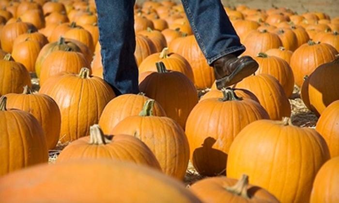 Dave's Pumpkin Patch - West Sacramento: $27 for Fall Farm Activities for Four at Dave's Pumpkin Patch ($54 Value)