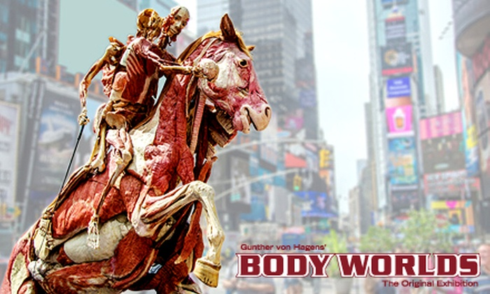 """Body Worlds"" - Discovery Times Square: ""Body Worlds: Pulse"" Human-Anatomy Exhibit at Discovery Times Square (Up to 42% Off)"